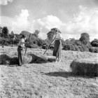 Haymaking-with-early-machinery4